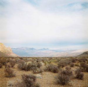 Anita Beaney - Photography - Nevada Roadside