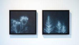 Susie Dureau - Eucalyptus - painting
